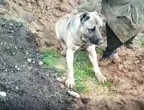 EĞİTİM DERNEĞİ - Hatay'da Köpeğin Zehirlenerek Öldürülmesine Soruşturma