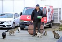 GARIBAN - Onu Gören Kedi Ve Köpekler Esas Duruşa Geçiyor