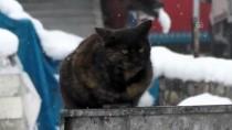 Ovacık'ta Kar Yağışı Hayatı Olumsuz Etkiledi