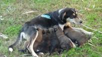 Vicdansızların Vurduğu Sokak Köpeği Yavrularına Kavuştu