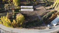 ÇORUH - Sular Altında Kalacak 151 Yıllık İlçenin Yeni Yerleşim Yeri İçin 30 Bin Meyve Fidanı Koruma Altına Alındı