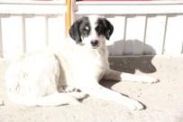 KıRAATHANE - Vefakar Köpek 6 Aydır Sahibinin Çıkmasını Bekliyor