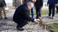 İLKER GÜNDÜZÖZ - Donmak Üzere Olan Yavru Köpekleri Jandarma Kurtardı
