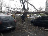 Devrilen ağaç 4 aracı hurdaya çevirdi!