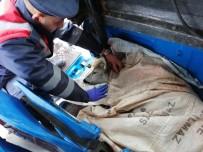 Yavru Karaca'ya Jandarma Sahip Çıktı
