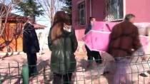 Yozgatta Sokak Kedilerine Isı Yalıtımlı Ahşap Kulübe