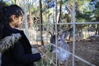 HAYVANAT BAHÇESİ - Hayvanat Bahçesi 1 Yılda 570 Bin Kişiyi Ağırladı