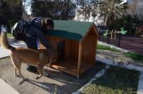 PİRİ REİS - Kuşadası Belediyesi Yeni Yılda Sokak Hayvanlarını Unutmadı
