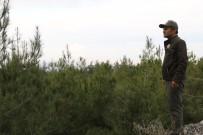 Yeni Yıla Çam Ağacı Nöbeti Tutarak Girecekler