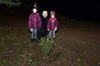 Yılbaşında Kesilen Ağaçlar İçin Yılın Son Dakikalarında Fidan Dikti