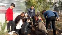 REHBER ÖĞRETMEN - Öğrenciler Okul Bahçelerine Fidan Dikti