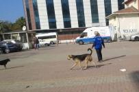 Hayvanseverlerden Erdek Belediyesine Tepki