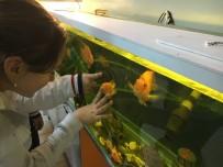 HAYVAN SEVGİSİ - İki Sırtında Da Kalp Şekli Oluşan Balık İlgi Odağı Oldu