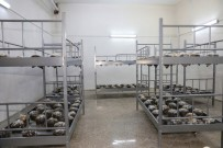 KAZANCı - Ziraat Fakültesi Bünyesinde Mantar Üretimine Başlandı