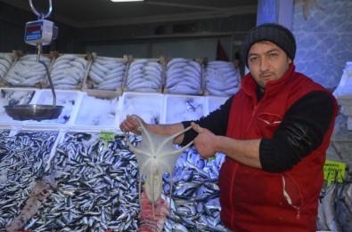 Balıkçı Ağlarına Takılan Şeffaf Ahtapot İlgi Odağı Oldu