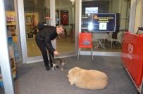 Köpek İle Kedinin Şaşırtan Dayanışması