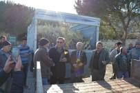 SADETTIN YÜCEL - Kuşadası'nda 8 Bin 600 Zeytin Fidanı Dağıtıldı