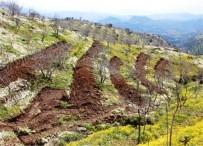 Orman Genel Müdür Yardımcısı Çelik, Aydın'da İncelemelerde Bulundu