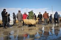 VAHDETTIN - (Özel) Vanlı Besicilerin Kış Mesaisi Zorlu Geçiyor