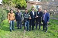 FIRAT ÇELİK - Koçarlı'da Biner Adet Zeytin Ve İncir Fidanı Dağıtıldı