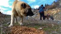 TANDOĞAN - Türk Chopper Motosiklet Grubu Üyeleri Sokak Hayvanları İçin Yem Ve Mama Bıraktı