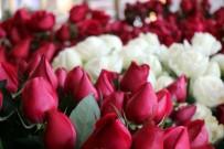 KIRMIZI GÜL - Sevgililer Günü'nde Buket Yerine Tek Gül