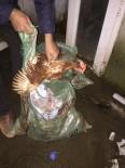 Çanakkale'de Tavuk Hırsızlığı