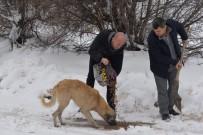 BOZÜYÜK BELEDİYESİ - Ormana Terk Edilen Köpeklere Belediye Eli