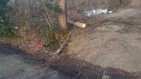 112 ACİL SERVİS - Kestiği Ağaçla Birlikte Yere Düşen Kişi Ağır Yaralandı