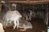 Soğukta Terk Edilen  At Ve Eşekler Koruma Altına Alındı