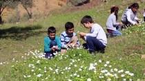 Antalya'da Meyve Ağaçları Çiçek Açtı