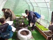 OKUL MÜDÜRÜ - Öğrenciler Okulda Kurdukları Serada Üretim Yapıyor
