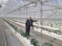 MEHMET ALI ÖZTÜRK - Sıfırdan Başladı, Yıllık 500 Ton Domates Üretiyor