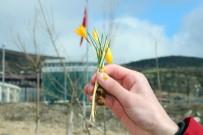 Yozgat'ta Baharın Müjdecisi Çiğdem Çiçekleri Erken Açtı