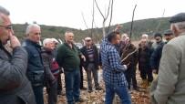 YERKESIK - Menteşe'de 45 Kursiyer Budama Kursu Eğitimi Aldı