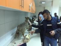 Balyalı Öğrenciler Veterinerlik Fakültesini Ziyaret Etti