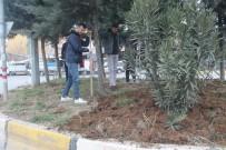 Kozluk'taki Refüjlerde Bahar Çalışmaları Başladı