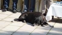 ÖĞRETMENLER - Sevimli Köpek Törene Damgasını Vurdu