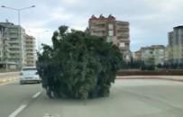 İLGİNÇ GÖRÜNTÜ - Adıyaman'da Yürüyen Çam Ağacı