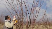HÜSEYIN YıLMAZ - Bahar Yüzünü Erken Gösterdi, Çiftçiler Kolları Sıvadı