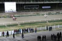 JOKEY - Haliliye Belediyesi Koşusunu 'Delicihan' Kazandı