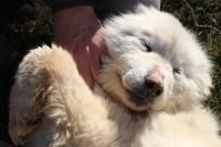 HAYVAN SEVGİSİ - Hastalıktan Ölmek Üzere Olan Köpeğin İnanılmaz Değişimi