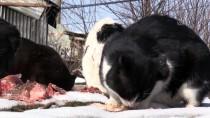 Sokak Kedilerinin Yiyeceğini Nehirden Sağlıyor