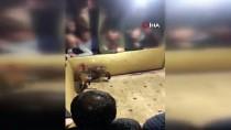 ÜSKÜDAR BELEDİYESİ - İstanbul'da Horoz Dövüştürülüp Bahis Oynatılan Çatı Katına Baskın Açıklaması 26 Kişiye İdari Para Cezası