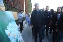 YEMEK YARIŞMASI - Cizre'de 2. Geleneksel Nergis Festivali Başladı