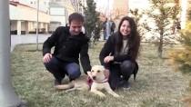 OMURİLİK FELCİ - Kazazede Köpek 'Kuki' Yürüteçle Hayata Tutundu