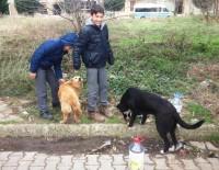 Öğrencilerden Sokak Hayvanlarına Yemek Ve Su
