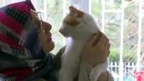 ÇÖMLEKÇI - Doğumunu Yaptırdığı Kedi İle Yavrularını Sahiplendi