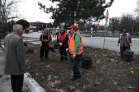 'Güller Diyarı Isparta'ya 5 Milyon Gül Dikimi Hedefi