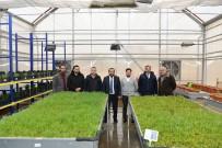 KMÜ, Çevre Düzenlemesi İçin Kendi Bitkisini Üretiyor